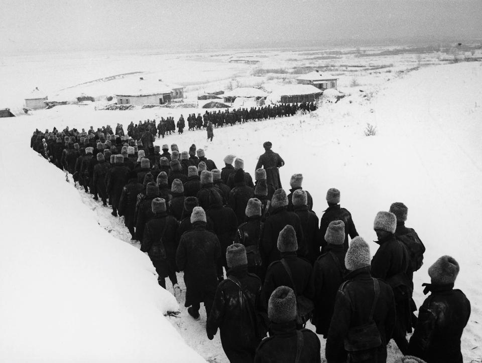 Sojusznicy w zimowej pułapce